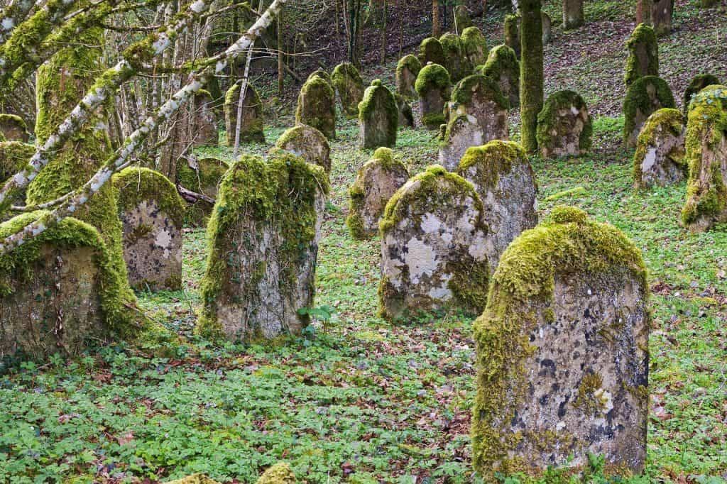 Dofinansowanie działań związanych z zachowaniem i utrwalaniem pamięci o historii i kulturze Żydów polskich i ich wkładzie w światową kulturę