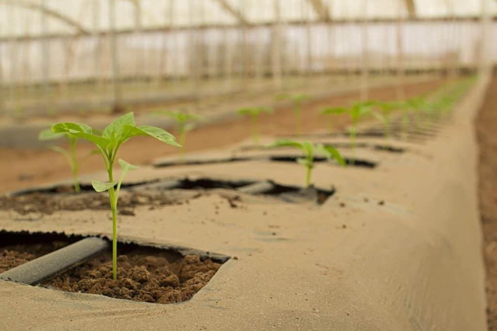 "Konkurs na projekty ""Green Deal"" z PROW 2014-2020"
