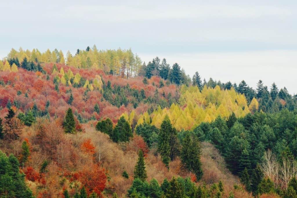 PROW 8.5 – Inwestycje zwiększające odporność ekosystemów leśnych i ich wartość dla środowiska