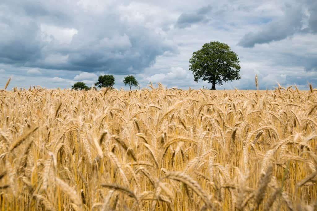 ARiMR: Rolnicy złożyli ponad 200 tys. oświadczeń o przyznanie dopłat za 2019 r.