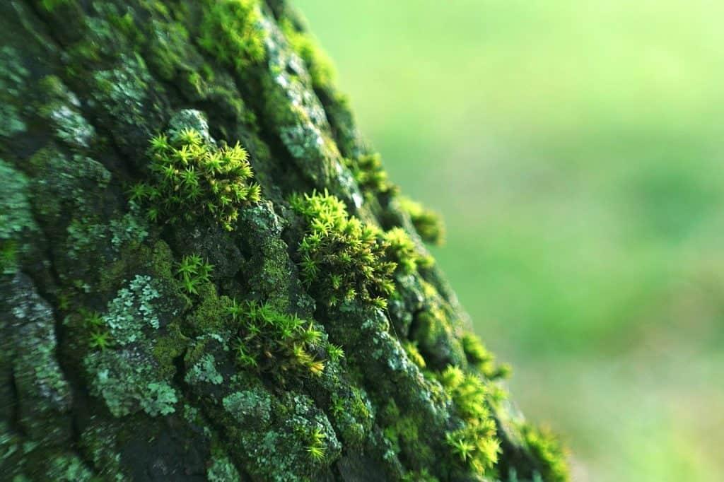 Program Środowisko, Energia i Zmiany Klimatu – Wdrażanie planów zarządzania ekosystemami
