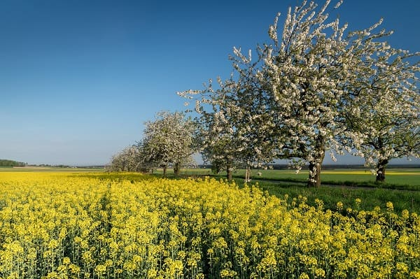 ARIMR opublikowała dane na temat aktualnej wartości wniosków o dotacje dla kół gospodyń wiejskich