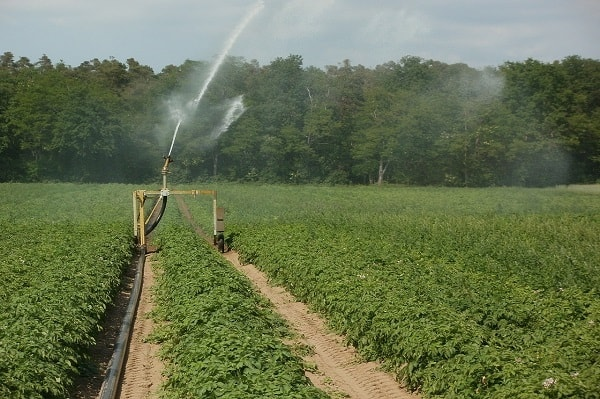PROW – Modernizacja gospodarstw rolnych: nawodnienia w gospodarstwie