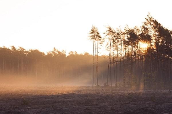 PROW – Wsparcie na zalesianie i tworzenie terenów zalesionych